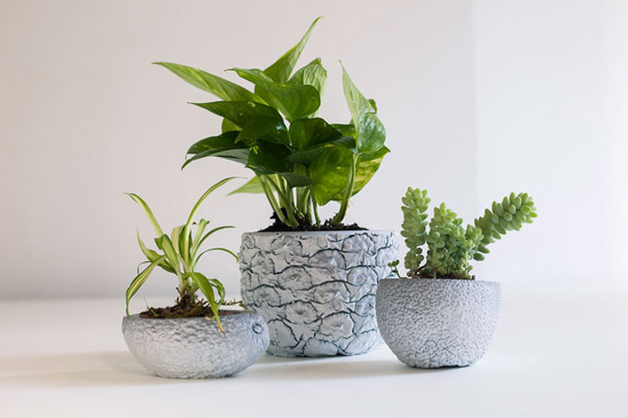 of-a-kind-chen-chen-kai-williams-planters-thumb-620x413-76539