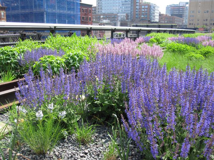 purple-flowers-mid