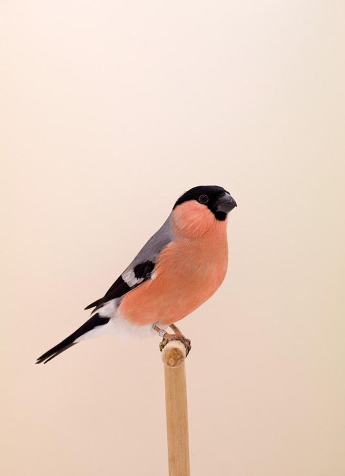 BIRD-14