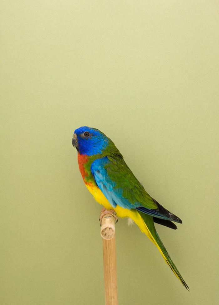BIRD-16