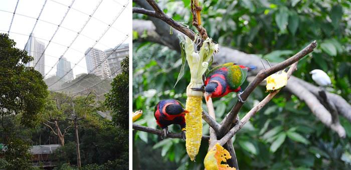 Hong-Kong-Park-birds