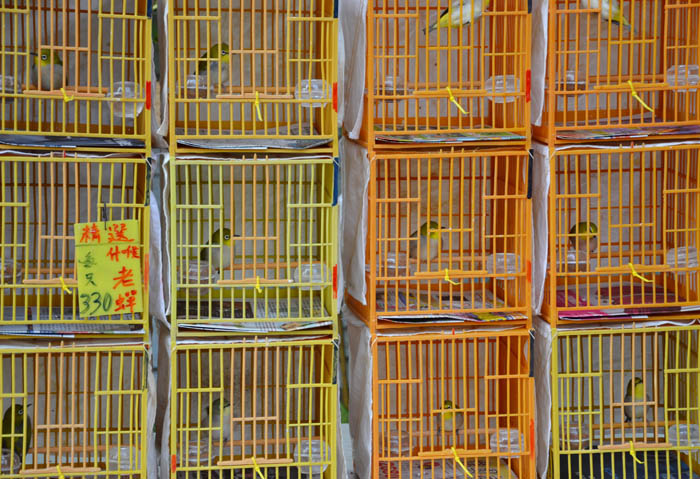 Hong-Kong-birds