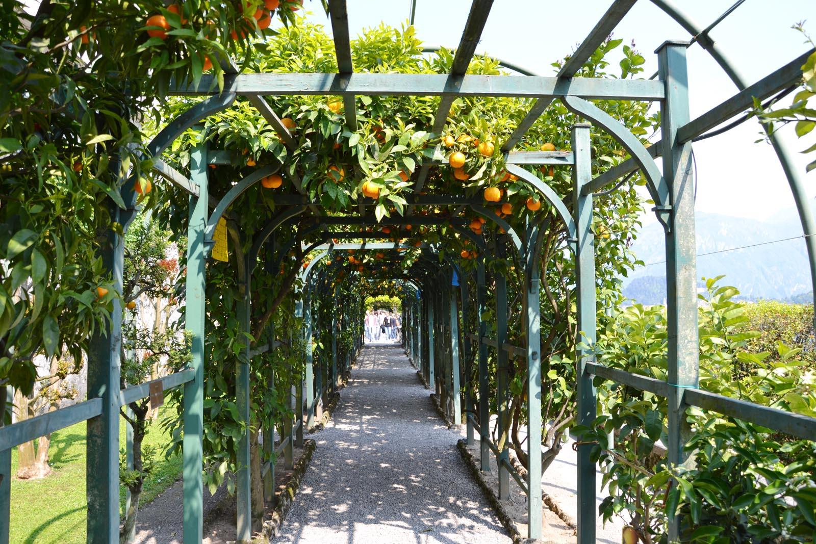 Villa-Carlotta-Gucki-Oranges