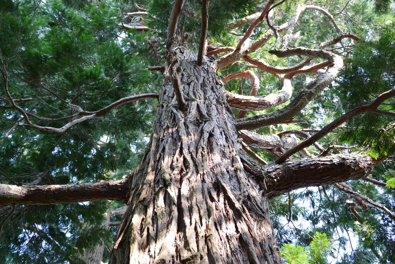 Villa-Carlotta-Gucki-tree