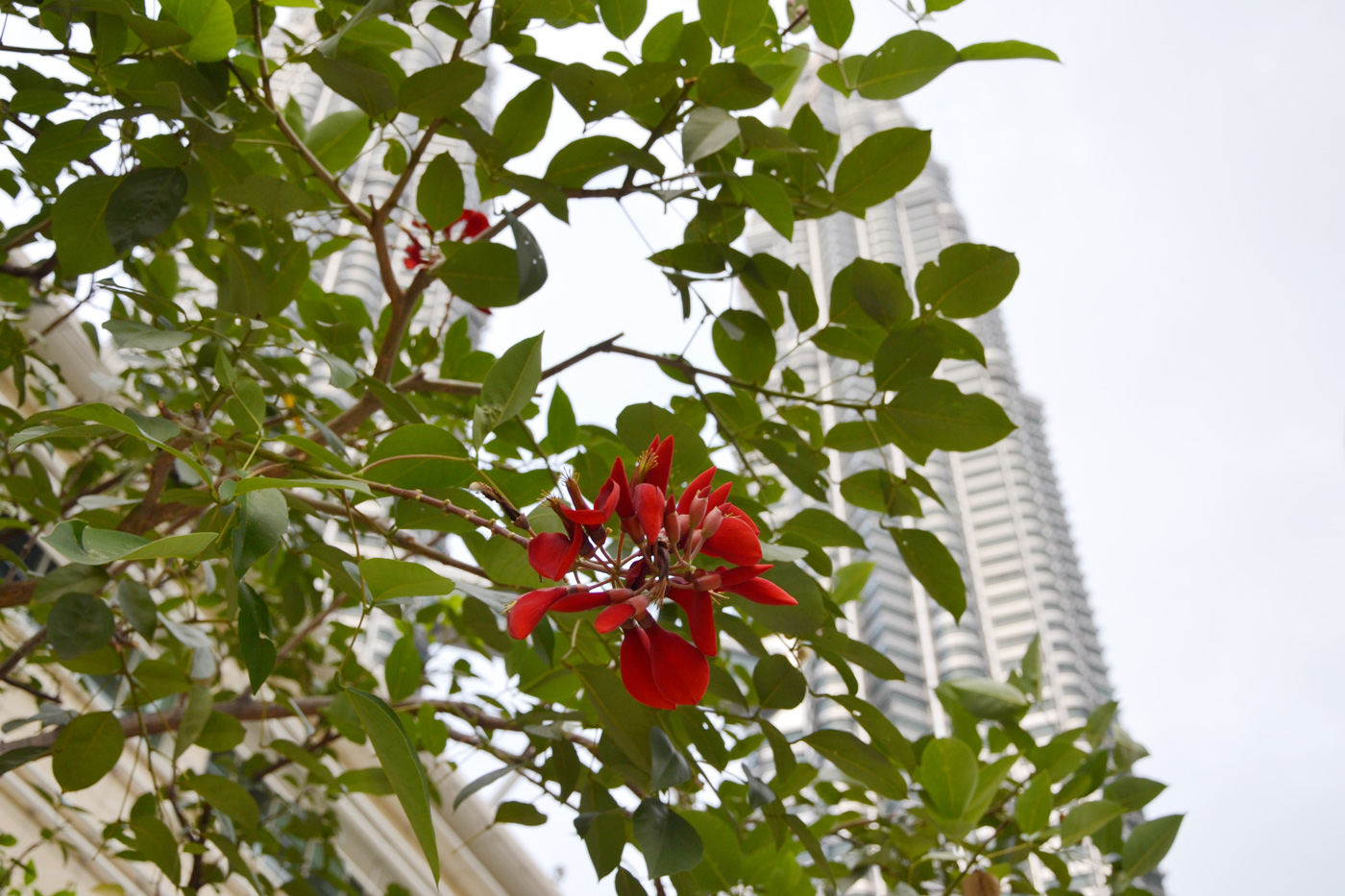 What-to-do-in-Kuala-Lumpur-petronas-tower-3
