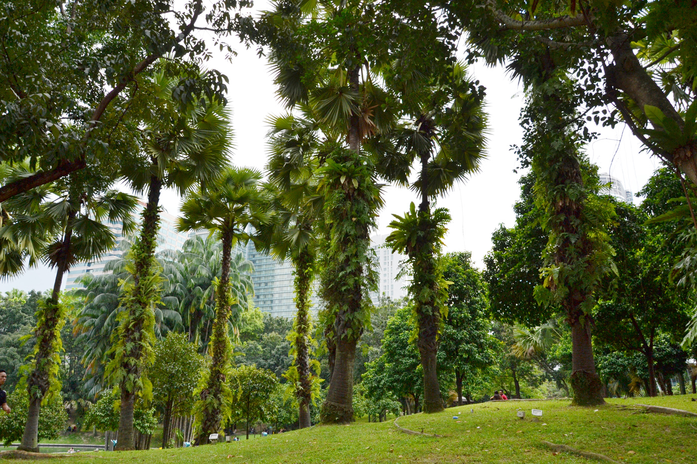 What-to-do-in-Kuala-Lumpur-petronas-tower-park
