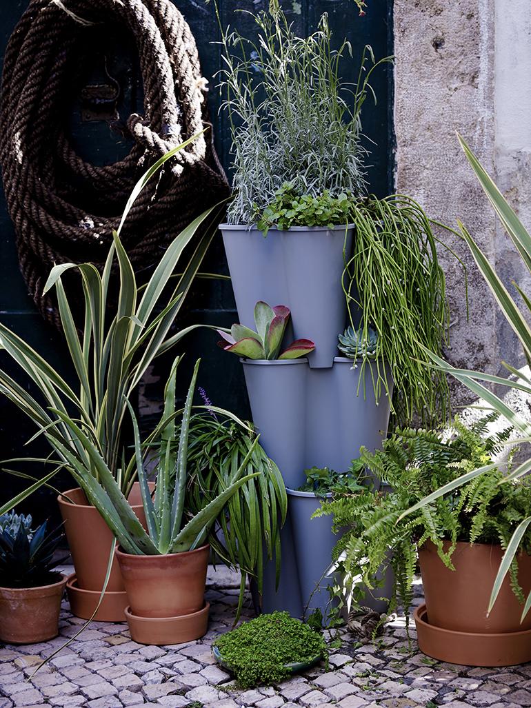 ikea piante novita