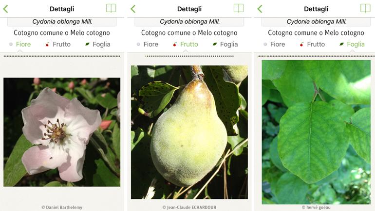 plantnet-app-plants