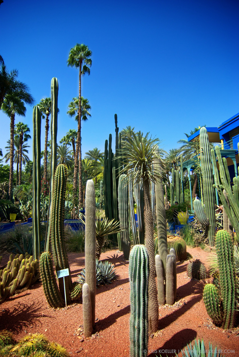 Jardin Majorelle Marrakesh - Yves Saint Laurent