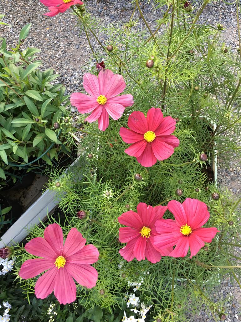 fiori-orticola-2016-16