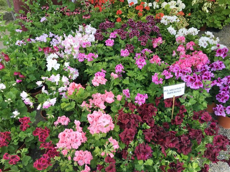 fiori-orticola-2016-24