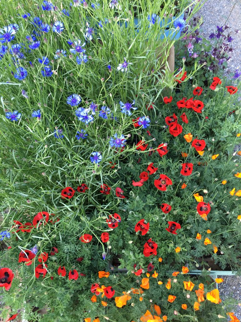 fiori-orticola-2016-6