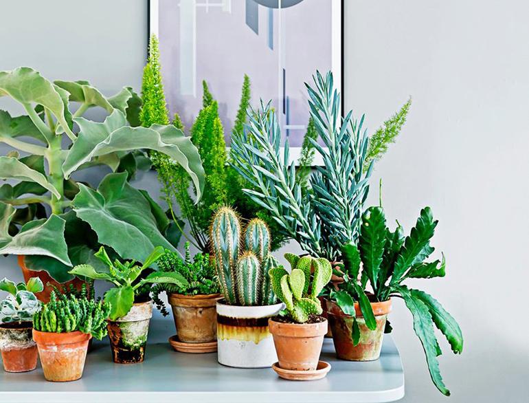 Le 12 piante da appartamento must have secondo pinterest for Maranta pianta