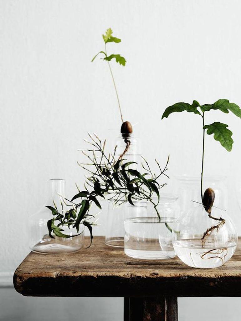 Faire-germer-des-arbres-dans-des-vases-transparents