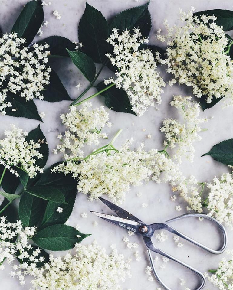 fiori-di-sambuco