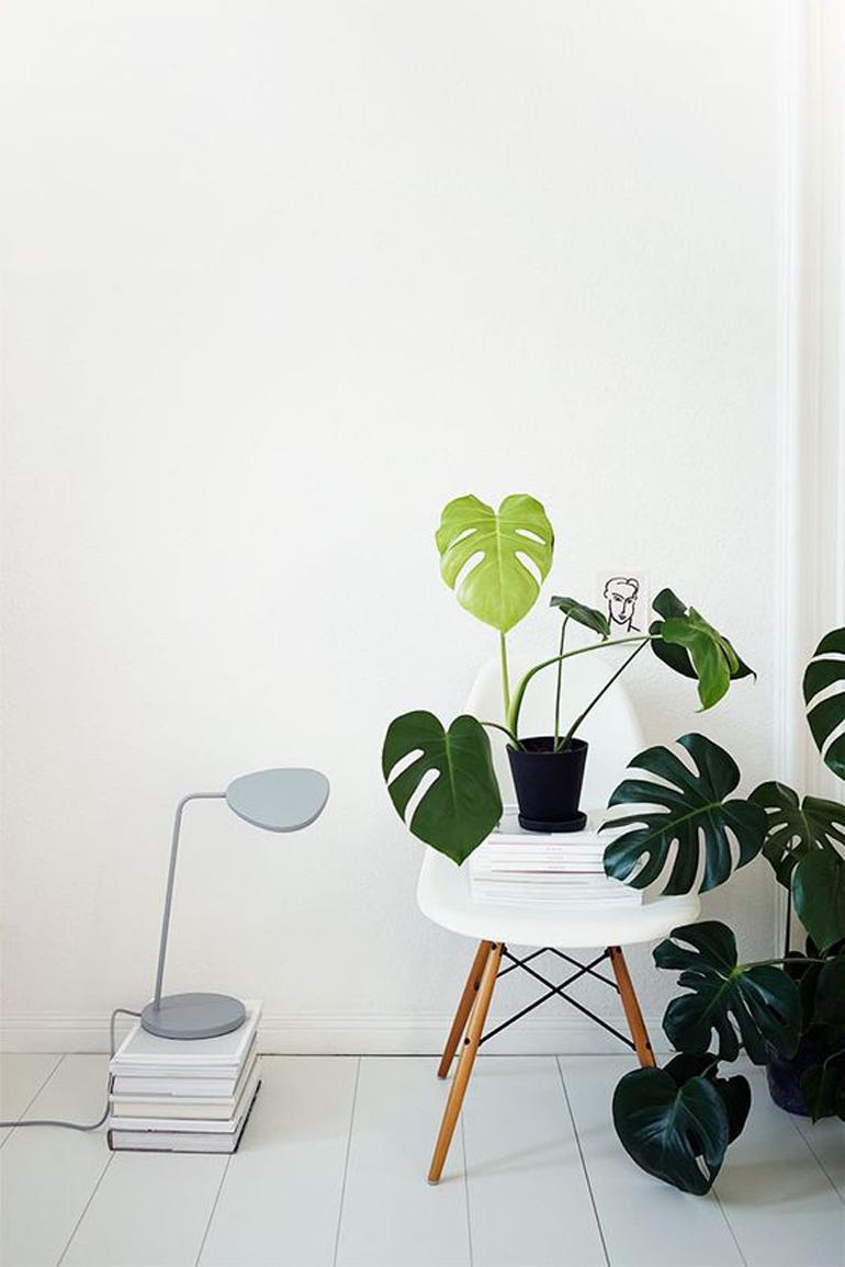 Piante Da Arredo Appartamento le 12 piante da appartamento must-have secondo pinterest