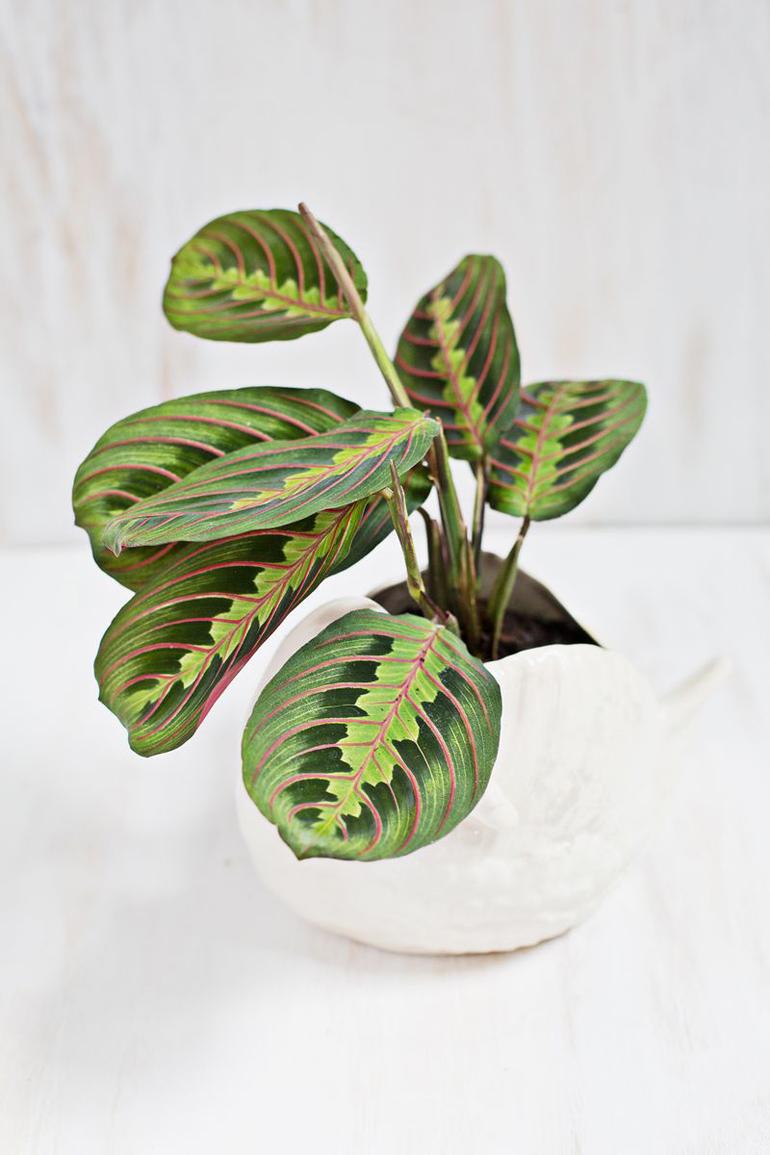 piante d'interni