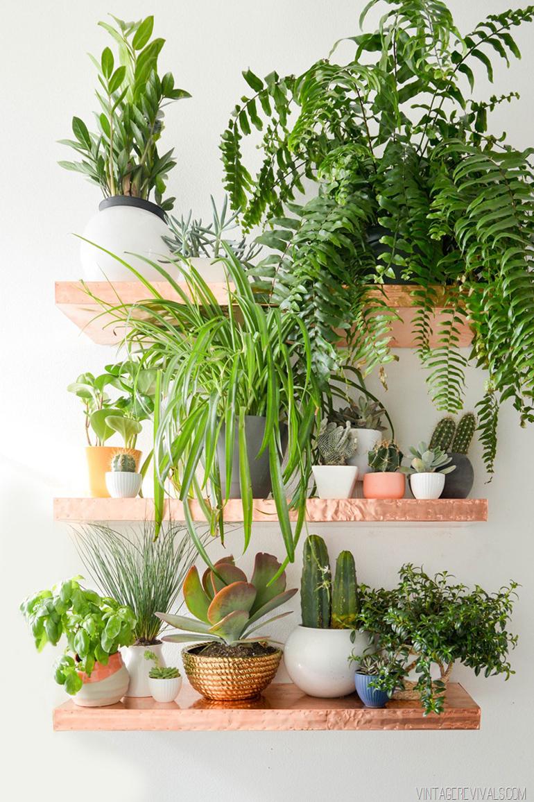 Piante Strane Da Appartamento le 12 piante da appartamento must-have secondo pinterest