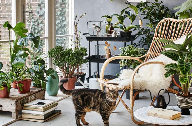 Estremamente Le 12 piante da appartamento must-have secondo Pinterest OP45
