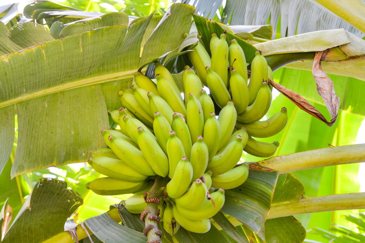 maui-hawaii-bedandbreakfast-12