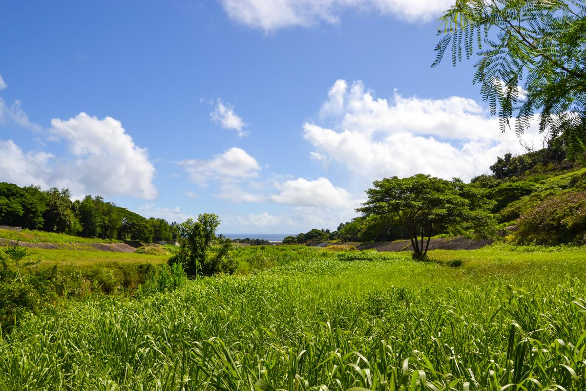 maui-hawaii-bedandbreakfast-39