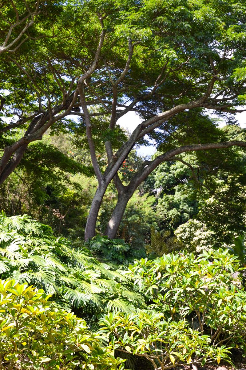 maui-hawaii-bedandbreakfast-41