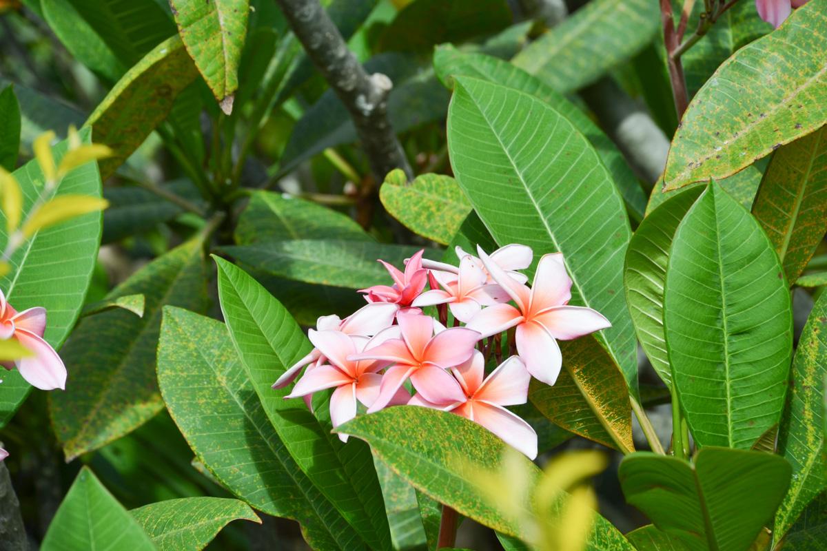 maui-hawaii-bedandbreakfast-42