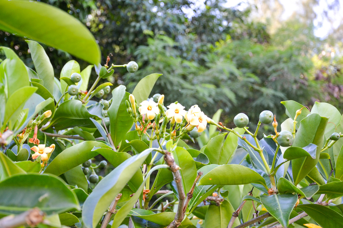maui-hawaii-bedandbreakfast-8