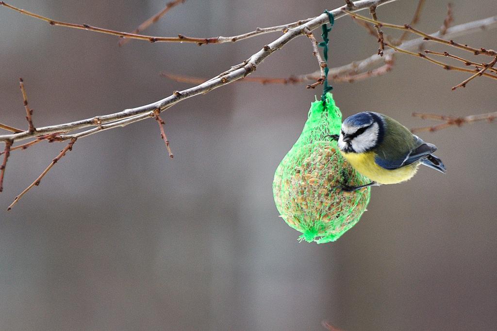 bombe-semi-grasso-per-uccellini