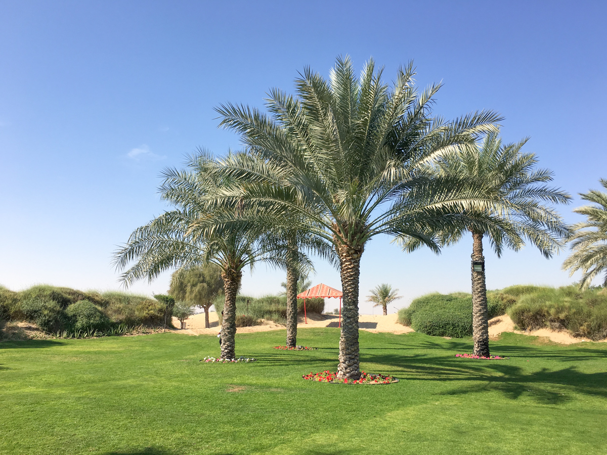 bab-al-shams-desert-resort-44