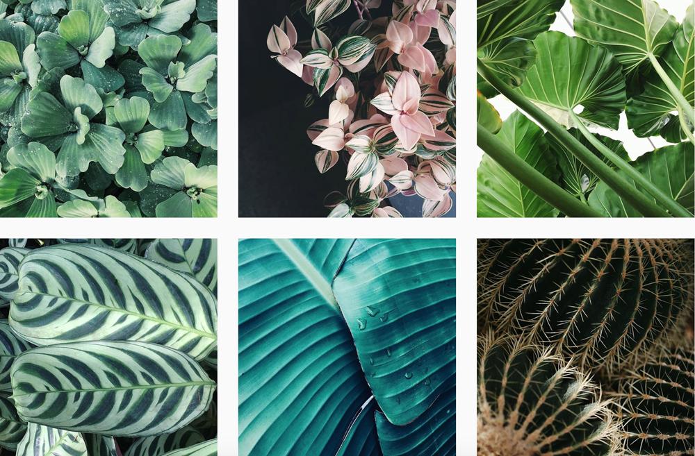 plants-instgram