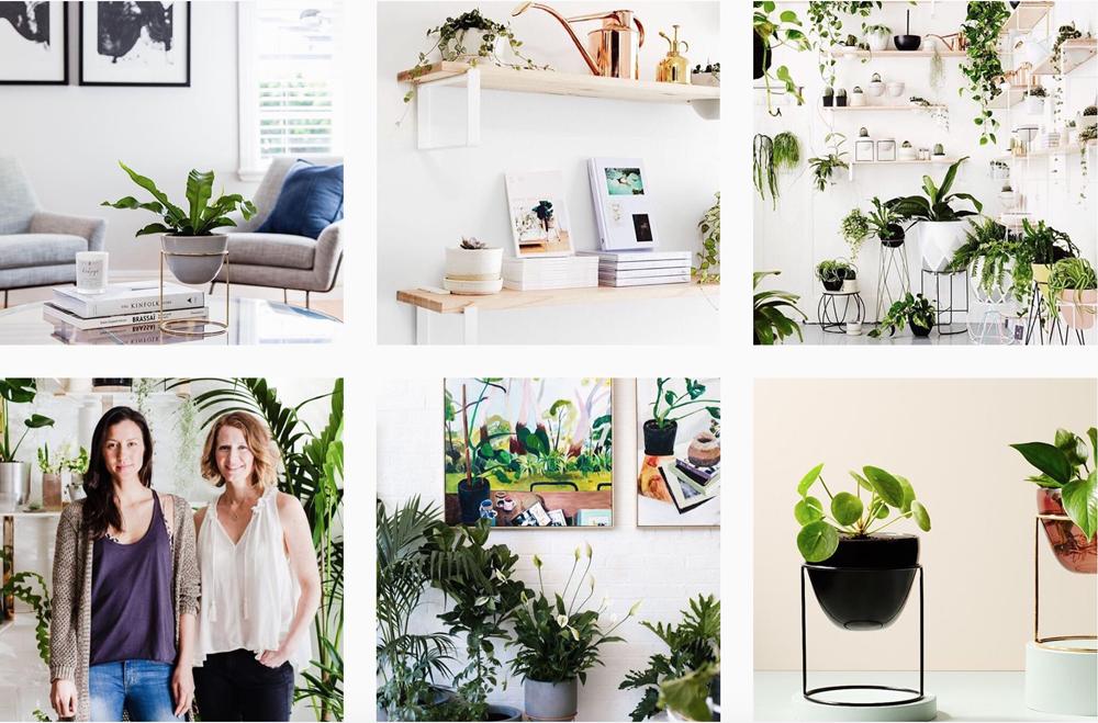 plants-instagram