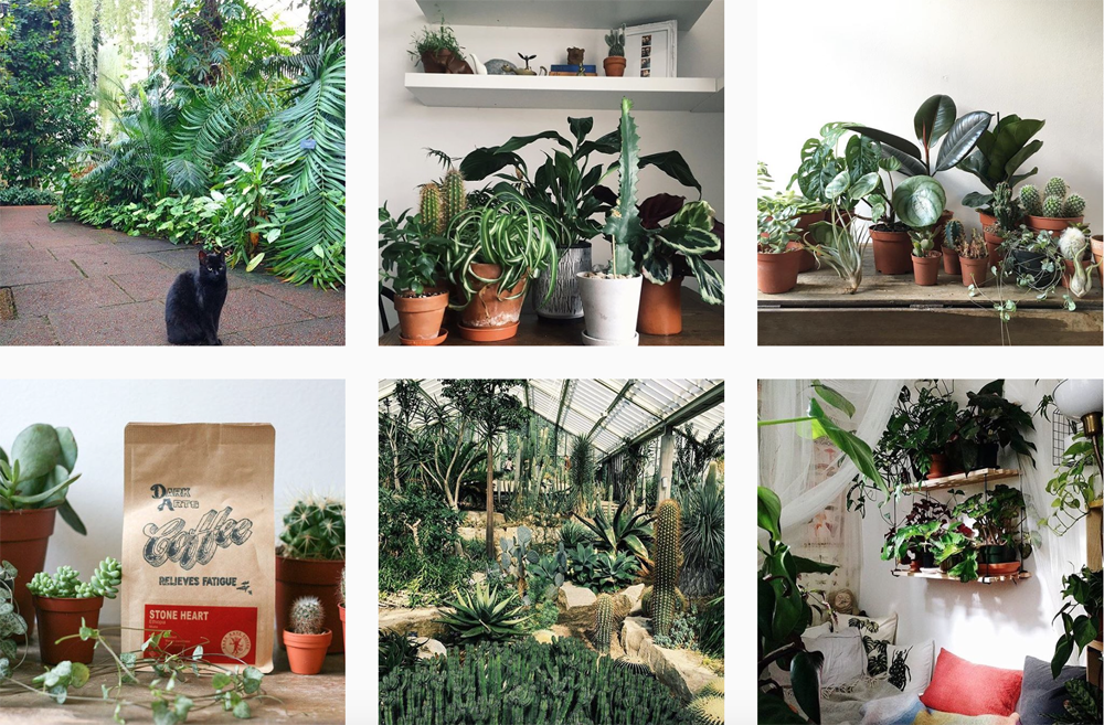 plants-instagram