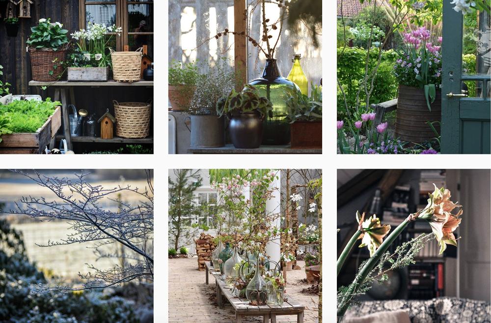 instagram-plants