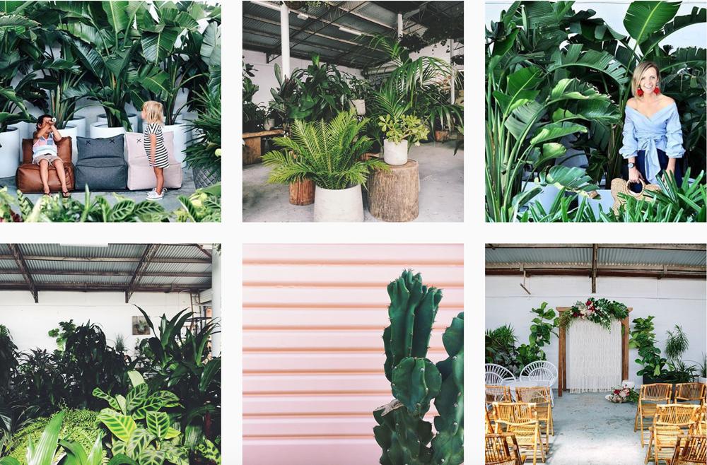 instagram-piante
