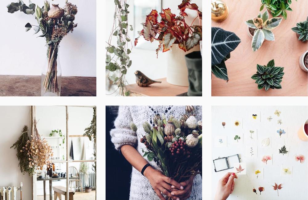 fiori instagram