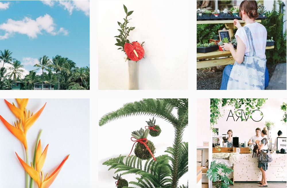 tropical-flower-hawaii