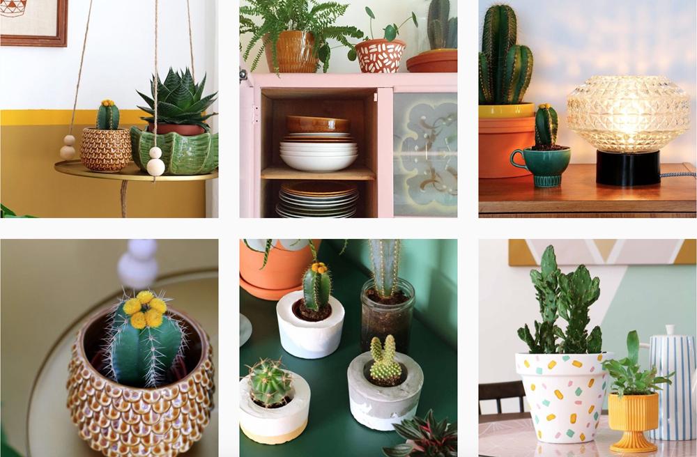 cactus-instagram