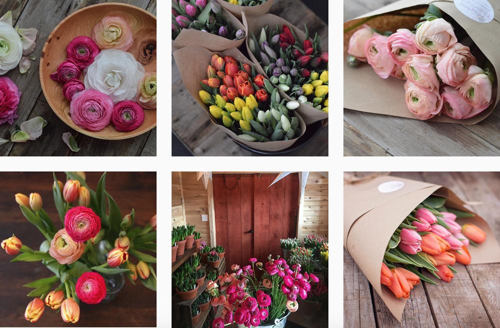tulipani-instagram