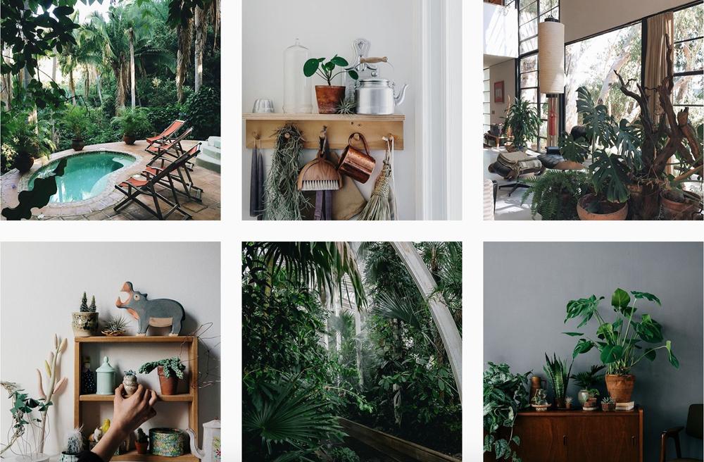 piante-instagram