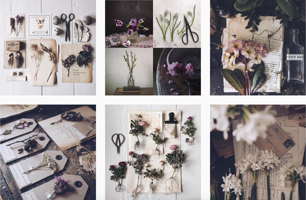 fiori-secchi