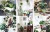 profili instagram dedicati a piante e fiori