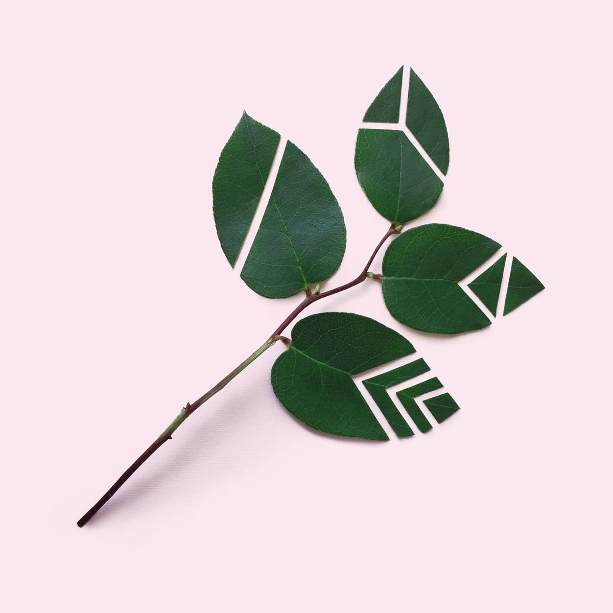 Cut+leaf