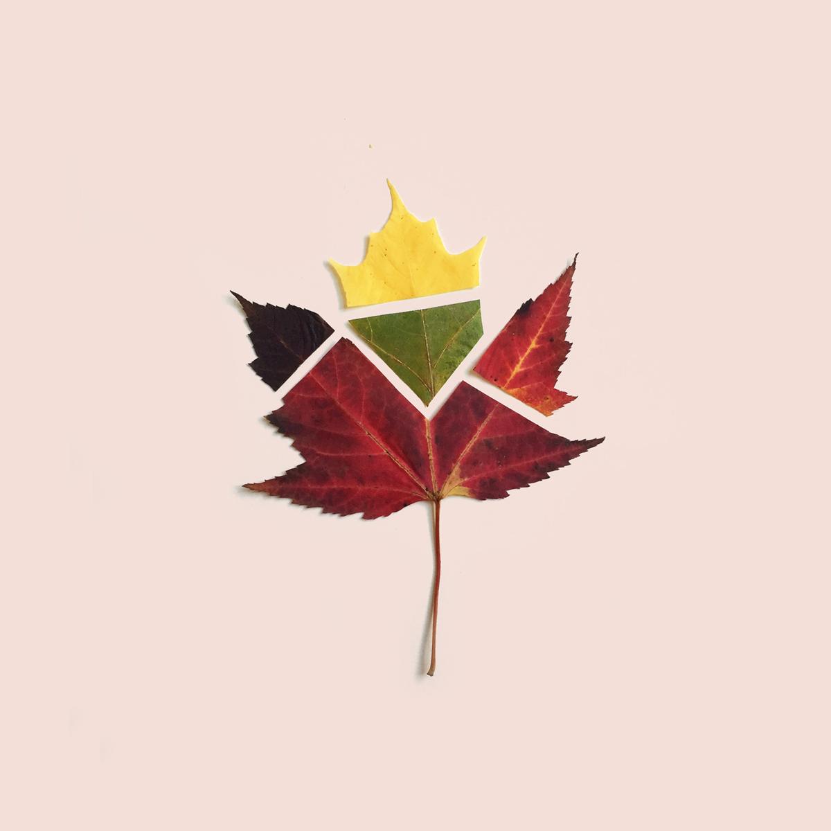 chopped+leaf