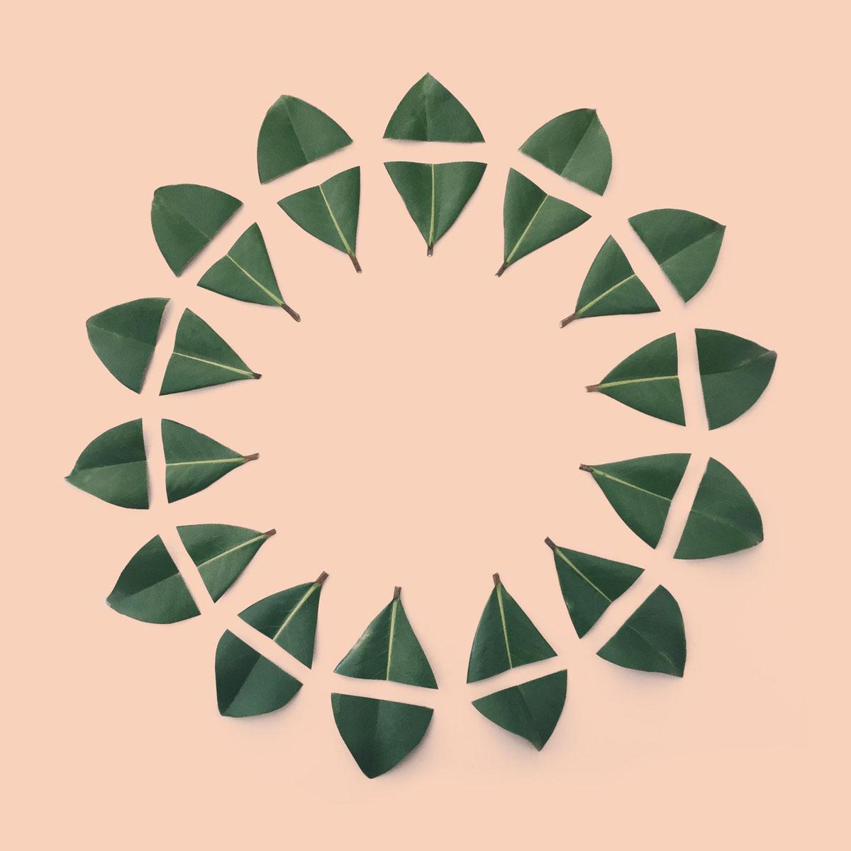 circle+of+magnolia+leavess