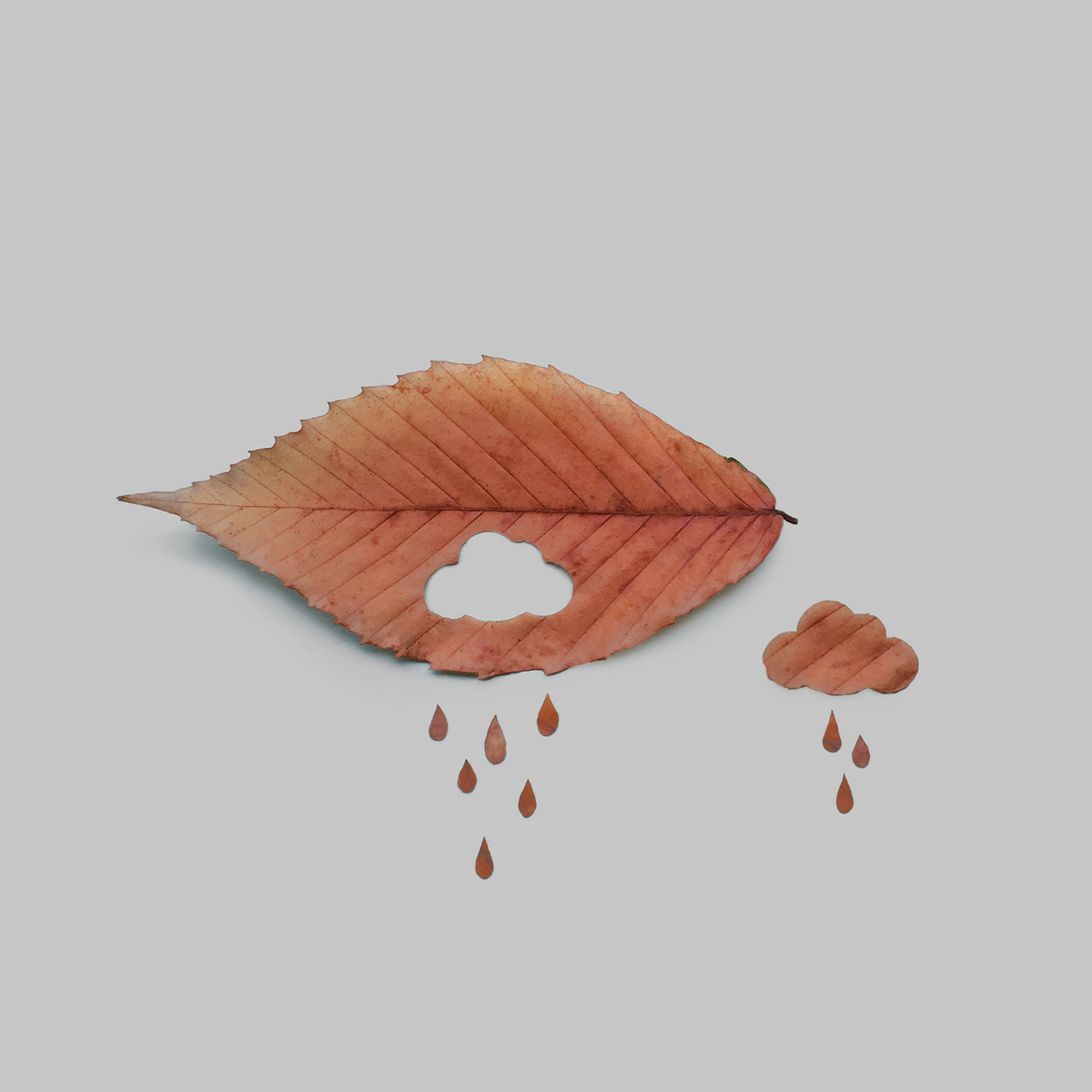cloud+leaf