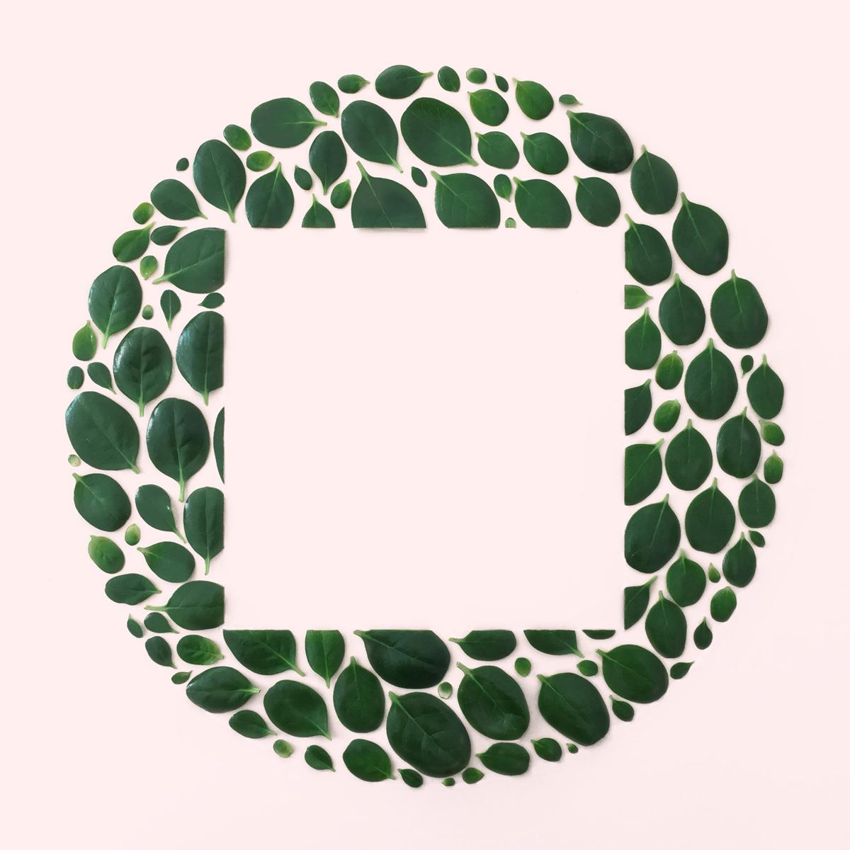 leaf+circle+square