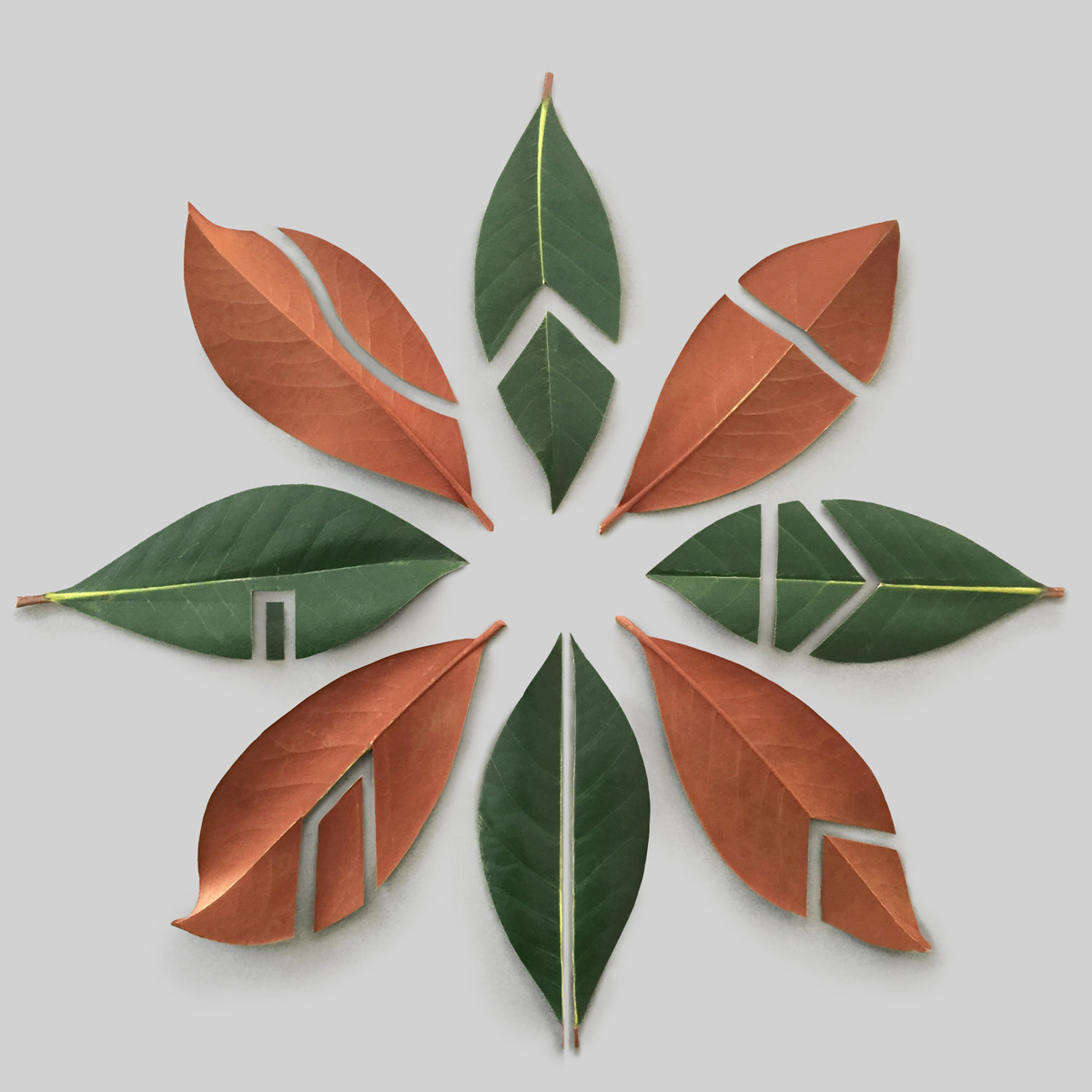 magnolia+leaves