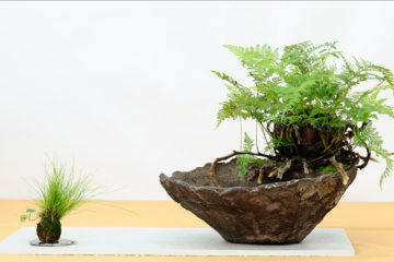 bonsai-pianta-da-compagnia