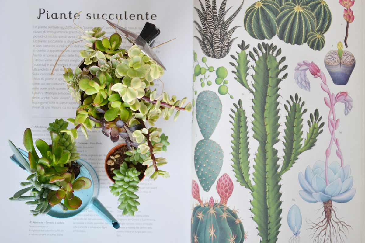 piante-grasse-fai-da-te